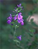 Salvia Christine Yeo