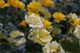 Almost daffodil yellow