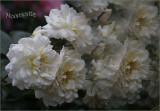 Clusters of petals