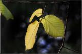 The last few leaves