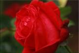 Alecs Red