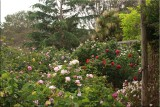 View in the rose garden