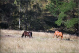 Our horses in the long grass