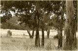 Tree copse