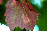 Vine - first signs