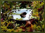 Birdbath amongst the autumn leaves