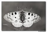 Butterflies of Italy