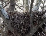 Eagle/Heron Nests