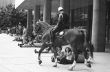 Mounted Police at Toronto Concert