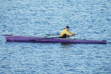 Rowing on the Harbour
