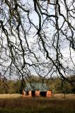 January 17 2006:  Hanging