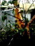 January 23 2006:  Smashed