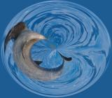 Distorted dolphin