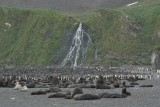 King penguin and Fur seals - Right Whale Bay