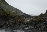Macaron penguin - Elsehul Harbour