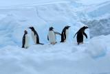 Falkland Islands, South Georgia and Antarctic, Jan/Feb 2008
