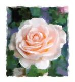 Pink Rose (full size)
