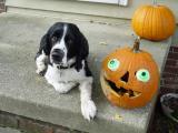 Buddy with pumpkin