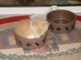 Aero the kitten