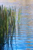 Winter Reflections - Lake Aura Vale
