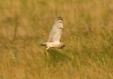 Yorkshire Birds