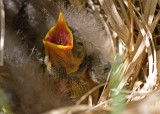 Nests and Nestlings