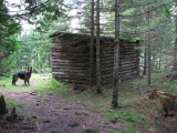Marlborough forest, log shelter