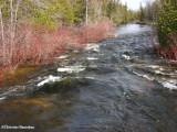 Spring runoff in Marlborough forest