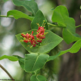 Plants of Marlborough Forest