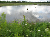 Marlborough forest, Roger's Pond