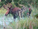 Mammals of Larose Forest