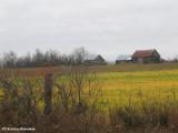 Log farm