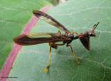 Brown mantisfly (Climaciella brunnea) , a mimic of vespid wasps