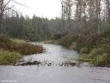 Marlborough Forest in the rain