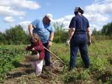 Potato picking with Dyedushka and Babushka