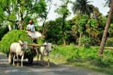 Transportation for Ecologists