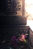 Cemetery 18
