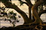 Nudgee-Beach