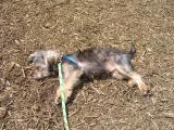 Sunbather Max