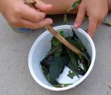 Leaf Soup...Lunch, Anyone?