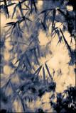 Image 62