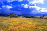 Valley of Wildflowers