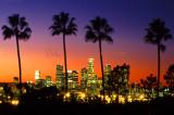 Los Angeles Palms