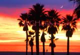 Sunset Moonlight Palms