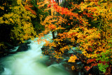 Creekside Autumn