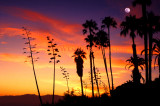 Palisades Palms