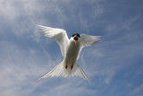 Scotland 2010 - Birds
