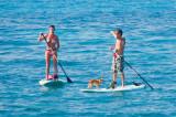 paddleboard puppy