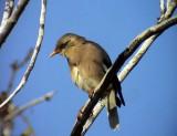 Birdtrip to Israel  27 Dec 2008- 4 Jan 2009