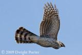 Sandia Mountains Raptor Migration